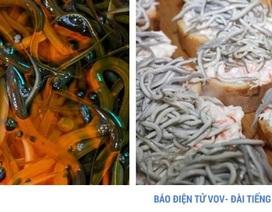 Lươn non Tây Ban Nha xấu xí, nhạt nhẽo nhưng có giá nghìn Euro