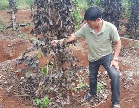 """Xuất hiện nhóm giang hồ """"đòi"""" bảo kê đất sản xuất của nông dân tại Đắk Nông!"""