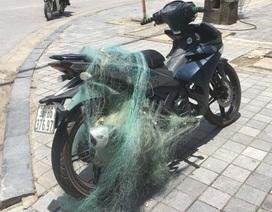 """CSGT Thanh Hóa tiếp tục """"quăng lưới"""" bắt xe vi phạm"""
