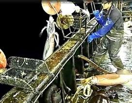 Vì sao đội tàu câu mực của Trung Quốc gây lo ngại?