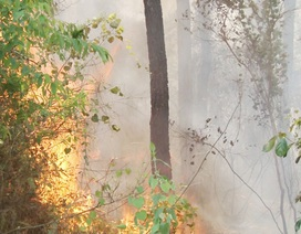 Huy động nhiều lực lượng cứu rừng thông bị cháy
