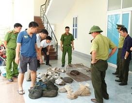 """Tê tê, rùa, ba ba """"ngồi"""" xe khách sang trọng từ Lào về Việt Nam"""
