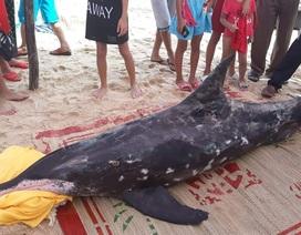 Cá heo đốm liên tục dạt vào bờ rồi chết đáng thương