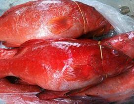 Cá mú đỏ chục triệu đồng/con, nhà giàu Việt mua để tủ lạnh ăn dần