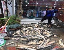 """Xót lòng đặc sản cá tầm """"bán rẻ như cho"""" trên vỉa hè ở Lai Châu sau lũ"""