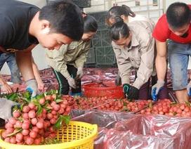 Hơn 30 quốc gia mua trên 87.000 tấn vải thiều Bắc Giang
