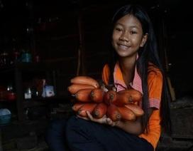 Từ chuyện cơn sốt chuối đỏ siêu lạ 600.000 đồng/kg