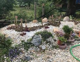 Độc đáo khu vườn sen đá hình bản đồ Việt Nam của mẹ Việt ở trời Tây