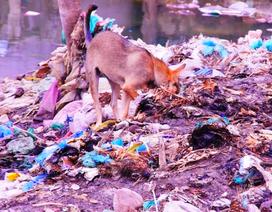 Cực hình suốt 10 năm ngửi mùi hôi thối từ bãi rác