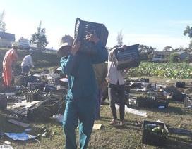 Người dân gom hàng chục tấn trái cây giúp tài xế gặp nạn