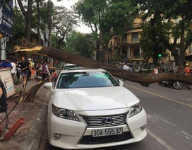 Hà Nội: Xe Lexus bất ngờ bị cây đổ đè bẹp trên phố