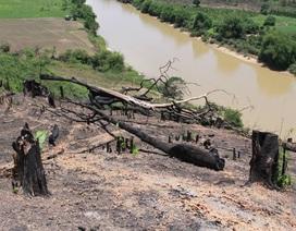 Để xảy phá rừng tại Khu bảo tồn thiên nhiên, 4 cán bộ kiểm lâm bị kỷ luật