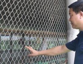 Kiếm tiền tỷ từ nuôi 5.000 gà Đông Tảo