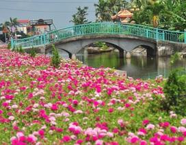 Chiêm ngưỡng vẻ đẹp của con đường hoa mười giờ đẹp nhất Việt Nam