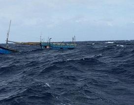 3 tàu cá hợp sức cứu 31 ngư dân trôi dạt trên biển Trường Sa