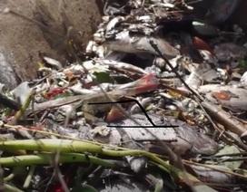 Đà Nẵng: Cá chết nổi đầy mặt sông Phú Lộc