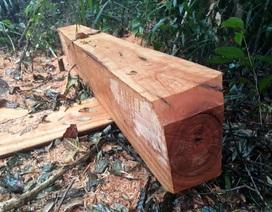 Kỷ luật 2 cán bộ vì để xảy ra phá rừng