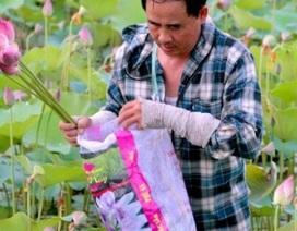 Hết mùa hoa sen, hái đài sen vẫn thu được tiền triệu/ngày