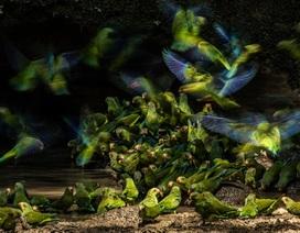 8 bức ảnh hoàn hảo chụp các loài chim trong thế giới hoang dã