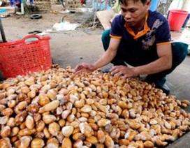 Tư thương Trung Quốc mua gom tới tấp hạt sầu riêng để làm gì?
