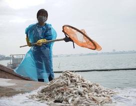 Bộ TN-MT đề nghị điều tra nguyên nhân cá Hồ Tây chết hàng loạt