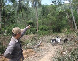 """Bình Định: Chủ rừng phải """"đóng phí"""" đường nông thôn mới để được vận chuyển keo?"""