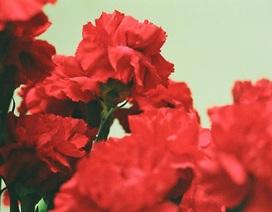 Trắc nghiệm: Bạn có biết tên các loài hoa trong tiếng Anh?