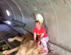 Liều mình chụp hình với sư tử, nữ du khách bị ngoạm lôi đi khắp chuồng