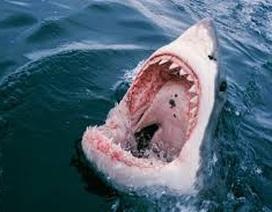 Đi chơi cùng mẹ, du khách nhí bị cá mập cắn đến mức nhập viện