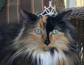 Thị trấn kỳ lạ bầu mèo, chó làm thị trưởng ở Mỹ