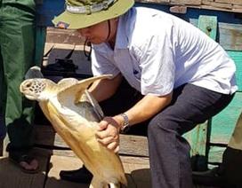 Thả rùa biển quý hiếm về tự nhiên