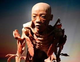 Triển lãm nội tạng và cơ thể người ở TP.HCM: Vừa phi nhân tính, vừa phản nghệ thuật