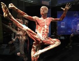 Triển lãm nội tạng và cơ thể người ở TP.HCM: Có dấu hiệu vi phạm pháp luật?