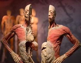 Triển lãm nội tạng và cơ thể người không phù hợp với văn hóa Việt Nam