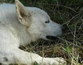 Chú chó hy sinh mạng sống để cứu chủ nhân bị điện giật
