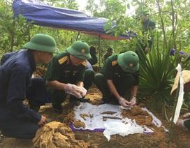 Tìm đồng đội giữa trùng điệp rừng xanh