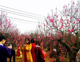 PGS-TS Nguyễn Thị Minh Thái: Chỉ nên đón một cái tết trong năm