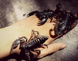 """Rùng mình với bộ sưu tập 12 thú cưng """"độc lạ"""" của 10x Khánh Hòa"""