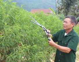 Hạnh phúc ngọt ngào của người cựu binh  sau 40 năm bám rừng, khai hoang