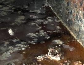 """Sau vụ quán cơm tấm sử dụng nguyên liệu """"lạ"""", phát hiện cơ sở ớt ngâm muối lẫn côn trùng"""
