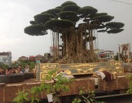 Đại gia Việt dát vàng bể cây cảnh: Không tốn mấy đâu...