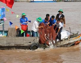 Thả hơn 7,6 tấn cá giống để tái tạo nguồn thủy sản