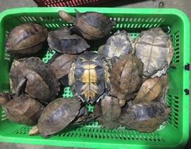 Khởi tố đối tượng mua bán 126 cá thể động vật hoang dã quý hiếm