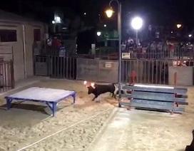 Mải chụp ảnh tham dự lễ hội bò tót, bị bò lồng lên đâm trọng thương