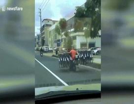 Há hốc mồm xem người đàn ông chở 16 xe đạp trên xe máy