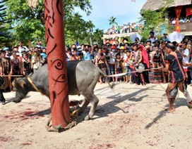 Xã nghèo vận động mỗi hộ dân đóng 300 ngàn đồng cho lễ hội đâm trâu