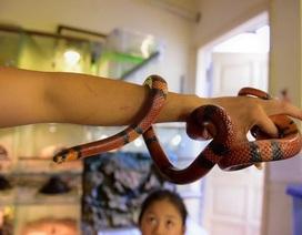 """Thú chơi siêu """"độc"""", siêu """"dị"""": Nuôi rắn cảnh, nhện khổng lồ trong nhà"""