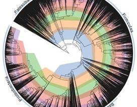 """Các nhà khoa học """"sửa chữa"""" cây đời của vi khuẩn"""