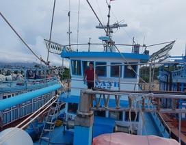 Phú Yên: Ngư dân thu tiền tỷ mỗi chuyến vươn khơi