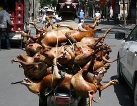 Hà Nội siết chặt hoạt động buôn bán, sử dụng thịt chó